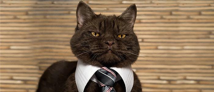 Cat CEO 3 - איך לגרום למיתוג מעסיק שלך, להעסיק את המנכ